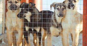 Симферопольская мэрия за много лет не смогла построить приют для животных