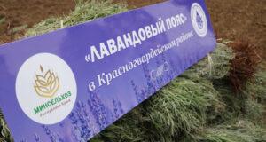 Андрей Рюмшин: В Красногвардейском районе высадят 6 тысяч саженцев лаванды
