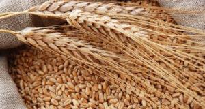 Минсельхоз РК: В Крыму проводится отбор покупателей пшеницы 3-5-го классов из запасов федерального интервенционного фонда сельхозпродукции без проведения биржевых торгов