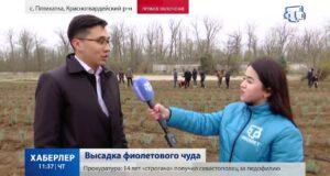 Турист из Ялты заказал вертолет для покупки фастфуда в Краснодаре