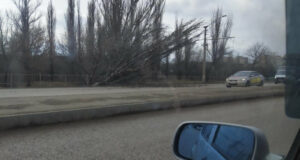 В Симферополе упавшее дерево повисло над дорогой, - ФОТО