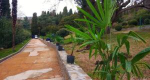 Минкульт РК: Продолжается восстановление пальмовой аллеи парка-памятника «Алупкинский»