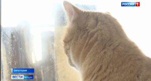 20 кошек в приюте Евпатории ждут своих хозяев
