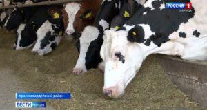 В Крыму студентам-аграриям провели лекции на молокозаводе