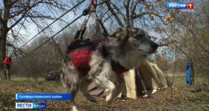 «Крым-СПАС» провёл тренировку служебных собак