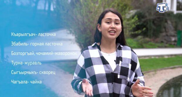 Рубрика «Левха» 21.04.21
