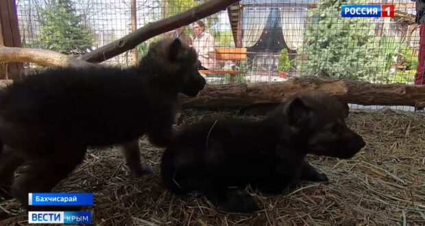 В зоопарке Бахчисарая впервые появились волки