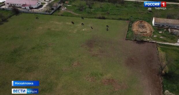 Крымчане встали на защиту истощенных лошадей в Нижнегорском районе