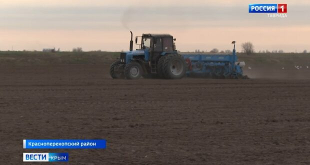 В Крыму ожидают крупный урожай подсолнечника