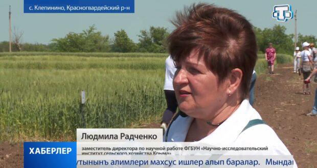 Крымские аграрии отметили День поля
