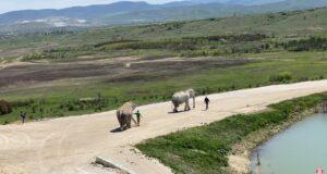 В «Тайгане» открыли вольер для слонов