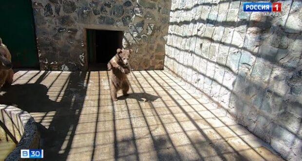 Впервые за 10 лет в зооуголке Симферополя родился медвежонок