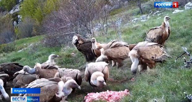 В Крыму устроили пир для хищных краснокнижных птиц