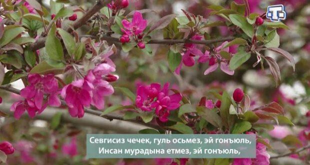 Рубрика «Шиир» 04.06.21