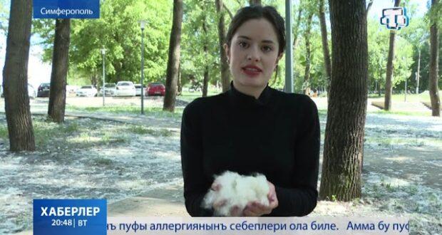 Весь в сугробах: тополиный пух в столичном парке