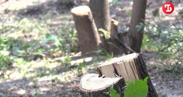 В Симферополе продолжается массовая вырубка деревьев