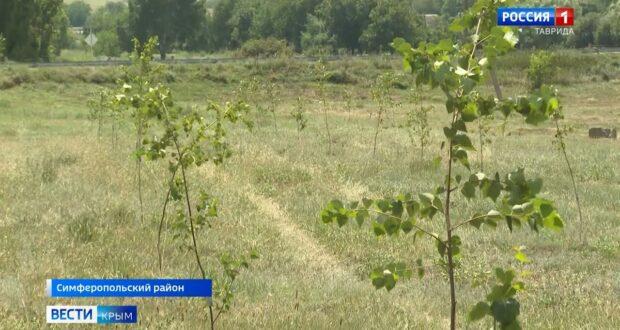 60 тысяч деревьев высадили под Симферополем