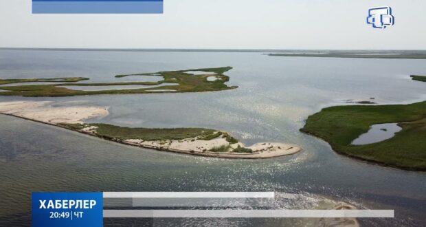 В заповеднике «Лебяжьи острова» увеличилось число краснокнижных птиц