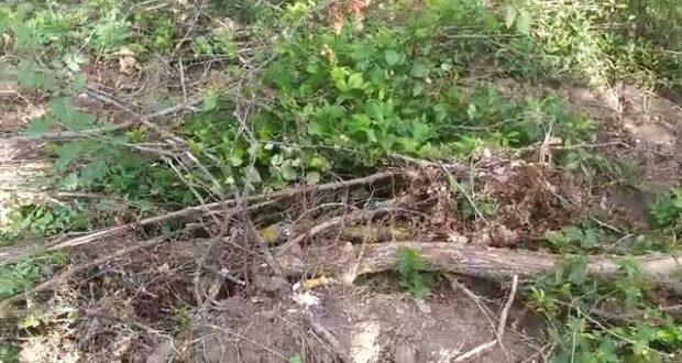 Житель Кубани на бульдозере уничтожил десятки деревьев в Бахчисарайском районе