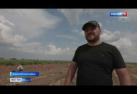 В Джанкойском районе дожди нанесли серьезные убытки аграриям