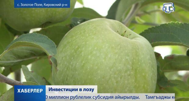 В Крыму планируют высаживать до тысячи гектаров виноградников в год