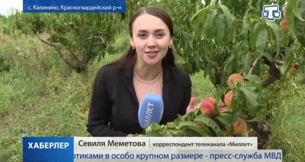 Крымские аграрии собрали более 700 тонн яблок