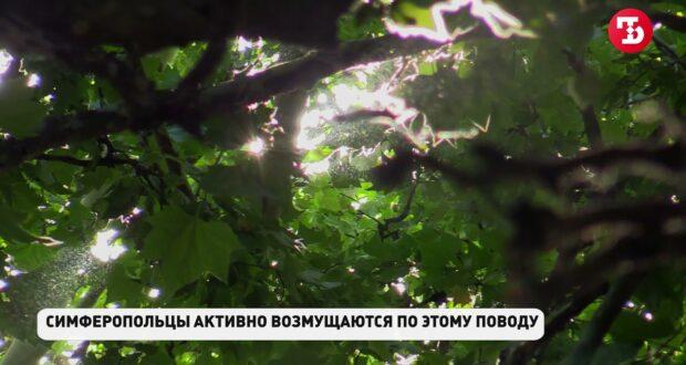 Снесут ли в Симферополе платаны на улице Киевской?