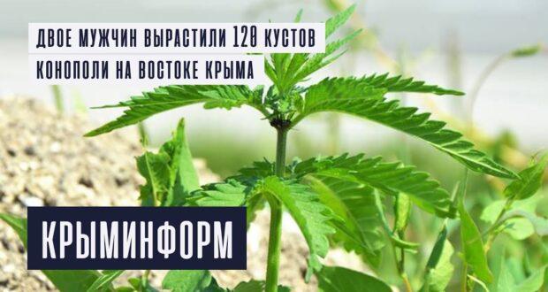 Полицейские задержали владельцев наркоплантации в Крыму