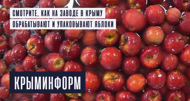 Яблоки собрали, отмыли и упаковали на заводе в Крыму