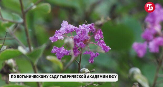 Как сейчас выглядит Ботанический сад КФУ в Симферополе