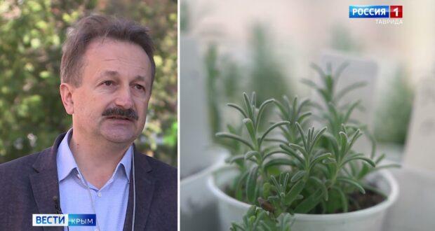 Для Крыма могут вывести засухоустойчивый сорт пшеницы