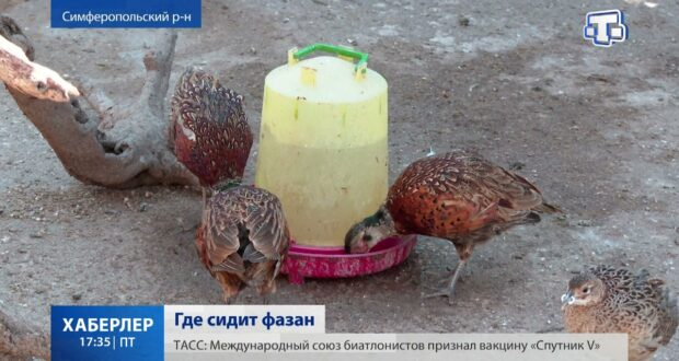 12 крымских фермеров получили почти 31 миллион рублей господдержки
