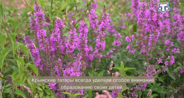 «Тарих излери» Выпуск от 10.10.2021 Буюк Мускомия/ Широкое