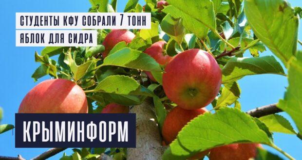 Студентов КФУ отправили собирать яблоки на сидр