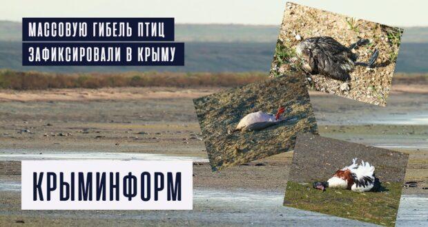 Массовая гибель птиц зафиксирована в Крыму