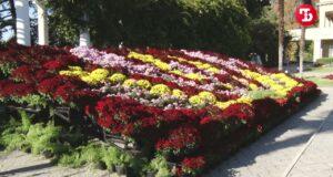 В Никитском ботаническом саду начался Бал хризантем